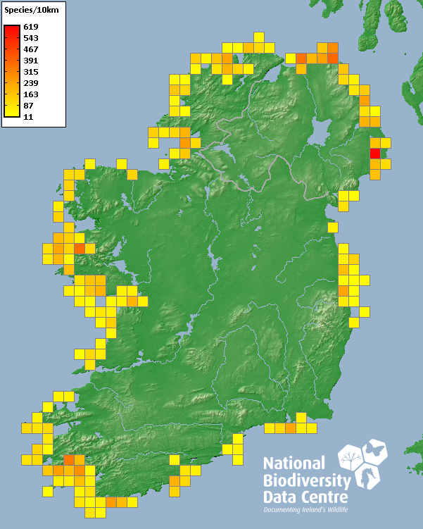 Marine Species in Irish Coastal Waters